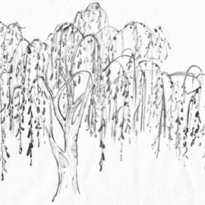 Mourning Weeping Willow