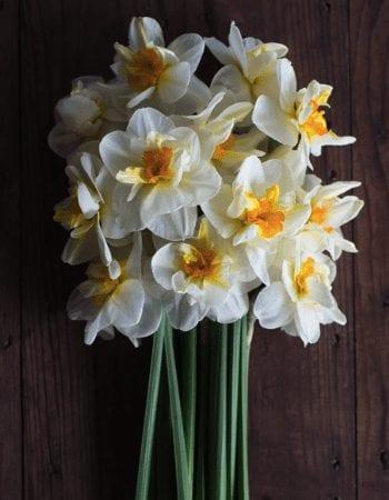 Held in High Regard Narcissus