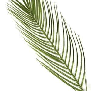 Victorious Palm Branch