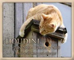 Amazing Pet Memorials 3